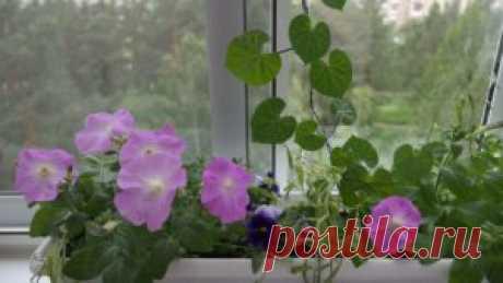 ZHenska la lógica - bashta en el balcón