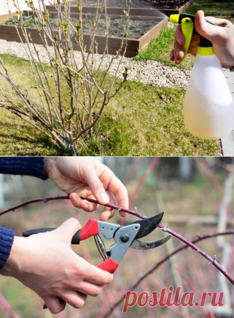 Весенний уход за ягодными кустарниками. Обрезка, подкормки, поливы. Фото — Ботаничка.ru