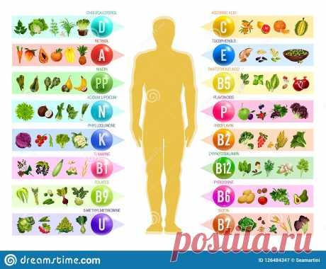 Название: Еда Vegan с витаминами питание Иллюстрация вектора - иллюстрации  насчитывающей vegan, витаминами: 126484347 Найдено в Google. Источник: ru.dreamstime.com
