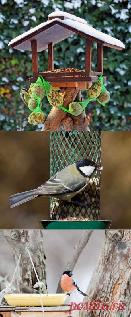 Birds feeders. Ideas: from simple to difficult