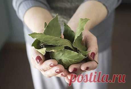 Этот лист — невероятно мощное средство от высокого давления, сахара в крови, кашля, отёков и лишнего веса! | OK.RU