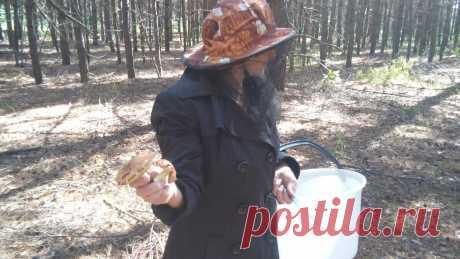 Как мы быстро обрабатываем грибы, если их собрали много. | Деревенский горожанин. | Яндекс Дзен