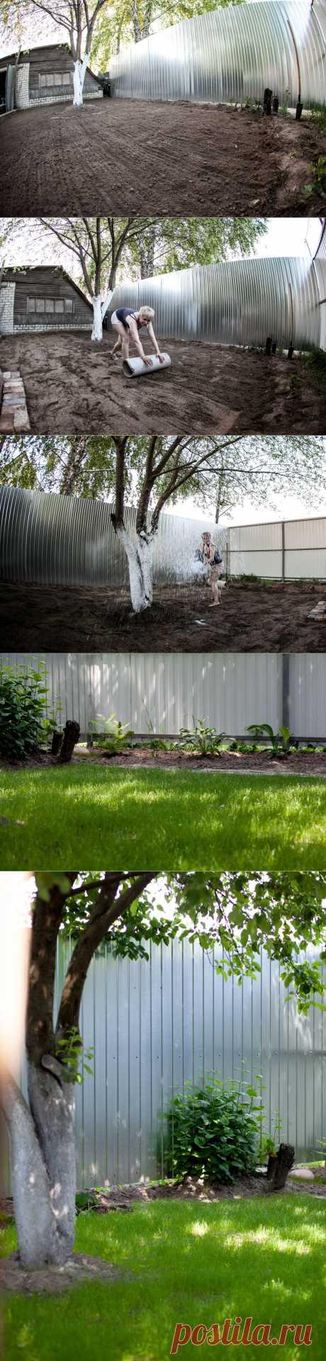 Мой первый газон.Уж очень мне захотелось посадить у себя в саду зелёный газон, пришлось хорошенечко постараться и приложить массу усилий, самое тяжёлое было перекапать участок и удалить  ненужные корни, сделать ровной поверхность участка, правильно посадить, полить и ждать когда же взойдёт, получилось,  хотя до отличного газона ещё далеко.