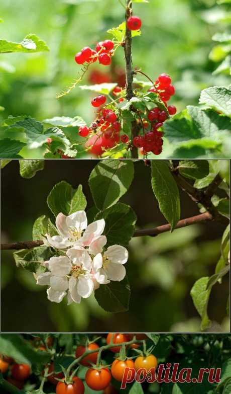 цитата Ирлеза : Календарь садовода. С апреля по сентябрь (00:06 16-02-2014) [4053934/313319136] - fotina.45@mail.ru - Почта Mail.Ru