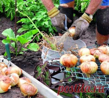 La INSTRUCCIÓN del horticultor-horticultor