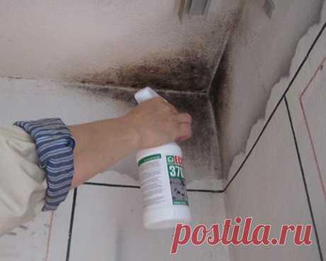 Как убрать плесень с обоев и стен под ними?