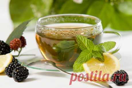 Учимся выбирать чай: от простой классики до экзотических сортов — Полезные советы