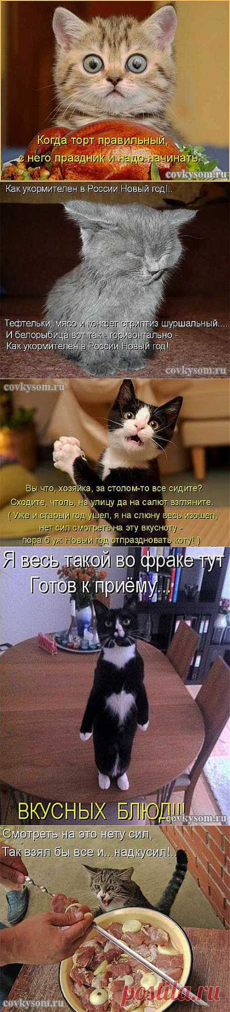 Кулинарный юмор в котоматрицах 32 | Со вкусом