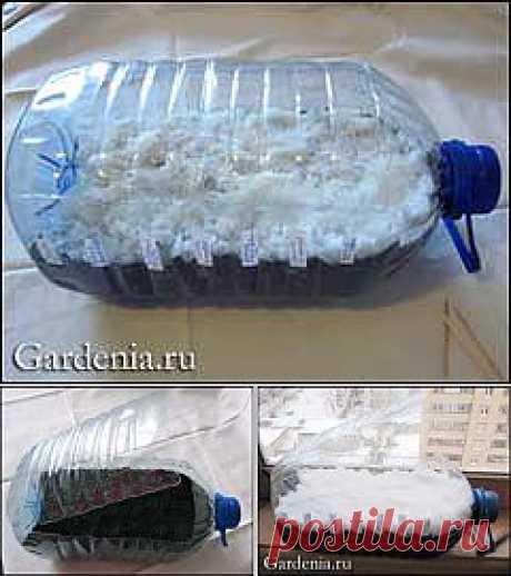 Выращивание сеянцев цветов в пластиковой бутылке..