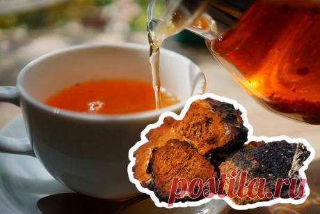 Чай из березовой чаги, как заваривать и принимать Березовая чага – лучшие рецепты приготовления чая, чем полезен, и как правильно заваривать целебный напиток. Природное средство от онкологии.