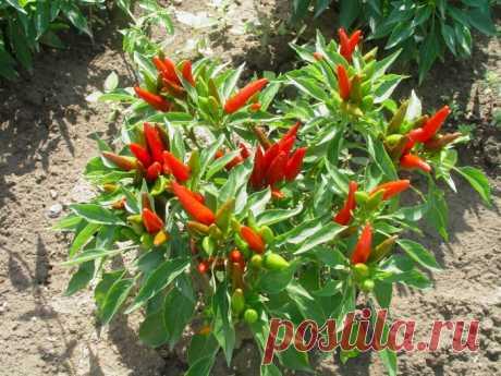 Специи и пряности и их целебные свойства — Садоводка