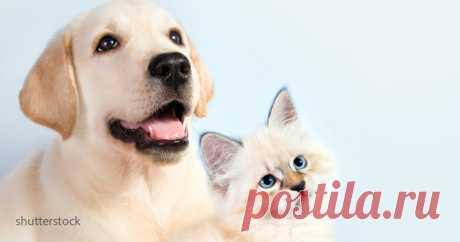 Средняя продолжительность жизни разных пород кошек и собак . Милая Я