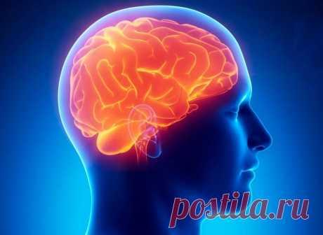 Причины сужения сосудов головного мозга / Будьте здоровы