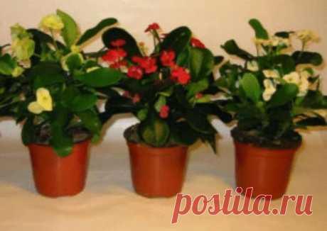 Флористы рекомендуют: 7 приемов, чтоб комнатные цветы росли как на дрожжах. – Нескучно