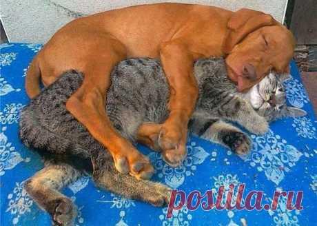 Los amigos que duermen, que trabarían amistad poco probable en la vida regular