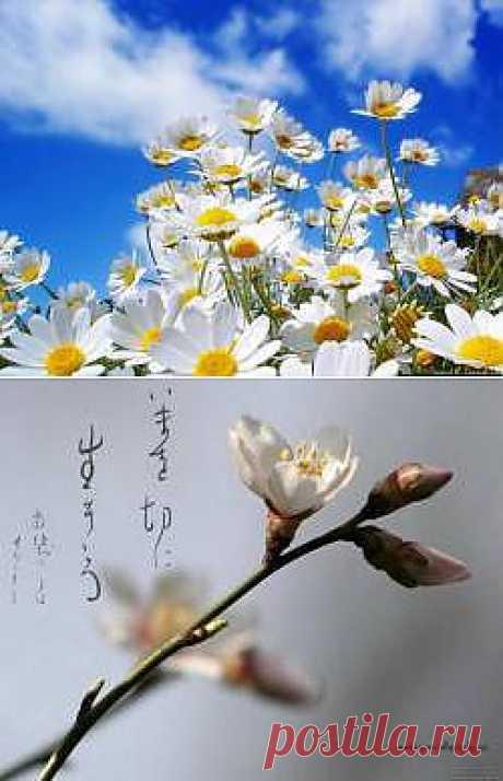 Красивые Весна картинки - 199 фото обои на рабочий стол галерея 1 - Фото мир природы