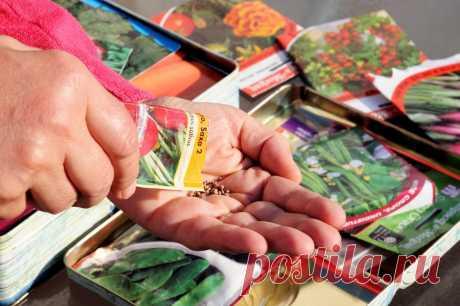 6 основных ошибок при выращивании рассады | На грядке (Огород.ru)
