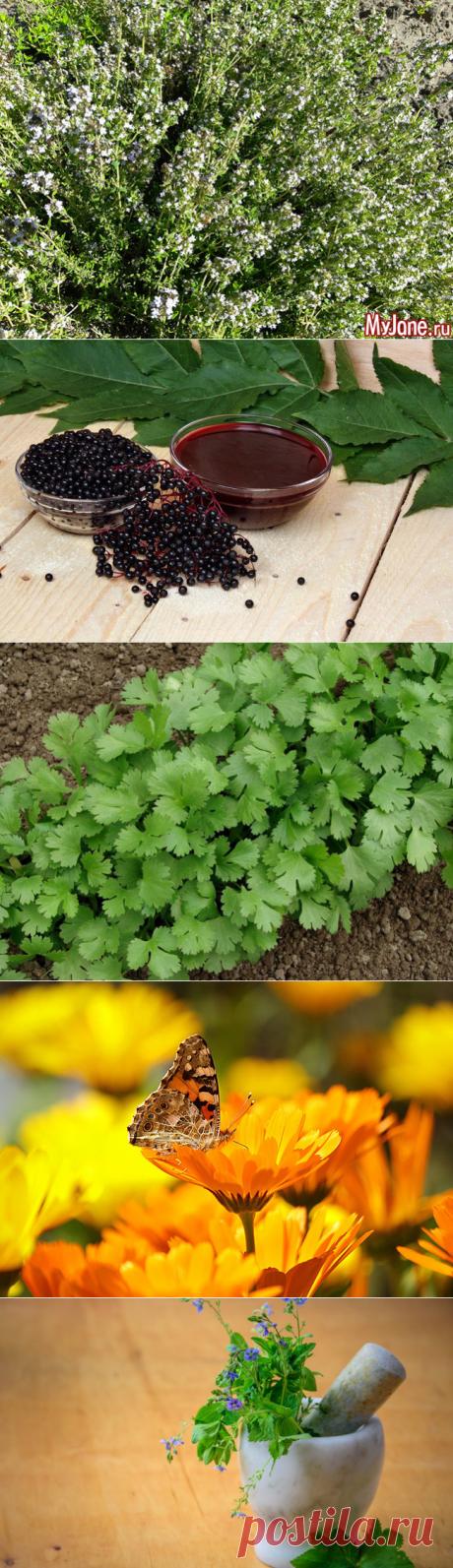 12 косметических растений, которые вы можете выращивать сами - растения, косметика, алоэ, маски, тоник