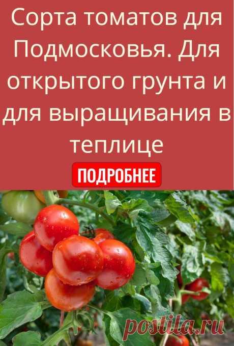 Сорта томатов для Подмосковья. Для открытого грунта и для выращивания в теплице