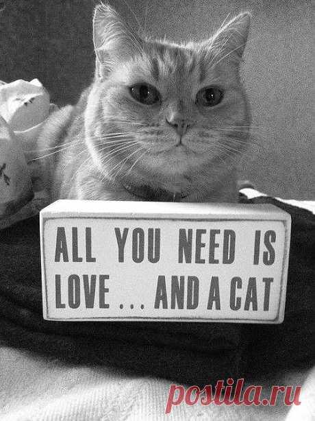 Всё, что вам нужно, это любовь... и кот!