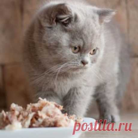 Как перевести кошку с сухого корма на домашнюю еду