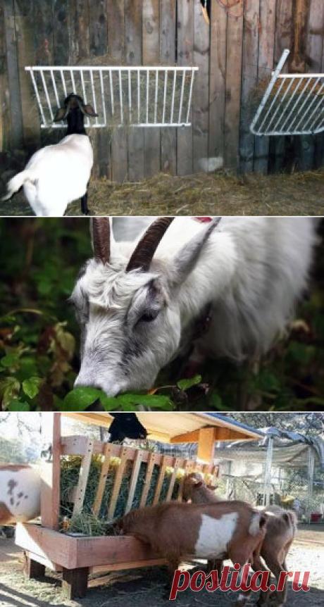 Нормы кормления коз – как правильно составить рацион