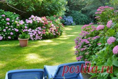 6 главных правил малоуходного сада от ландшафтного дизайнера. Как создать сад для ленивых? Фото — Ботаничка.ru