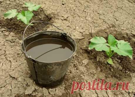 Гуминовые удобрения – что это такое и как они помогают увеличивать урожай