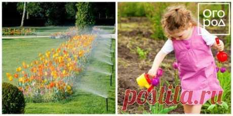 Чем подкормить тюльпаны весной и после цветения | Тюльпаны, Нарциссы (Огород.ru)