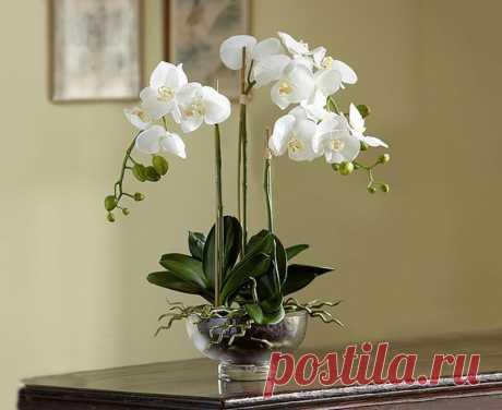 Как и когда правильно обрезать орхидею