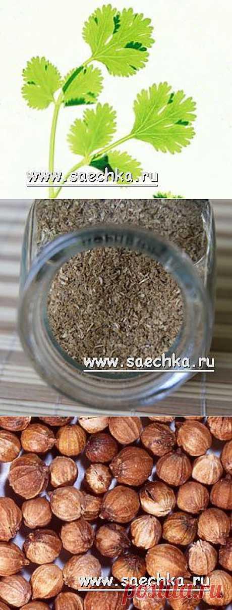 Кориандр (кинза) | Saechka.Ru - рецепты с фото