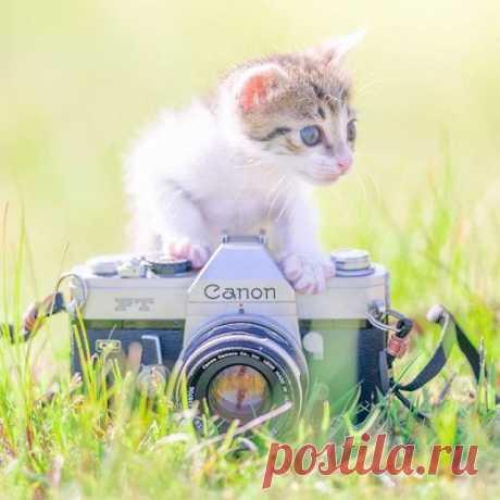 Очаровательные котята / Питомцы