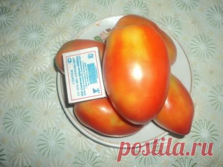 Мой любимый сорт томатов. Несколько хитростей выращивания отличных помидоров на даче в любую погоду на его примере. | Сад, огород, наука и ... лень | Яндекс Дзен
