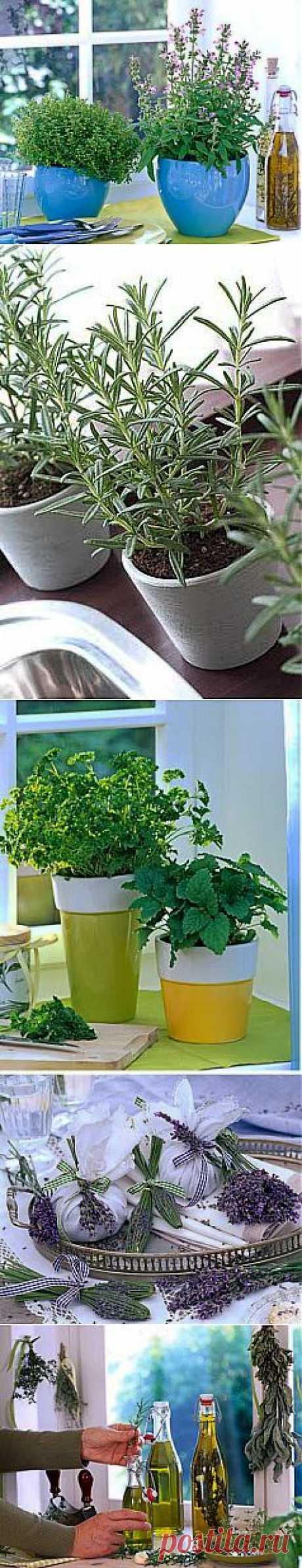 Как вырастить пряные травы на подоконнике? | GreenHome
