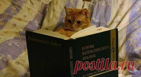 Занимательное кошачье чтиво