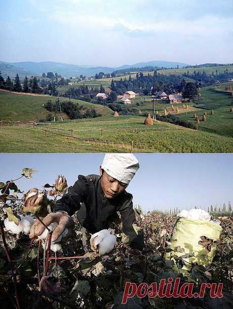 Как может измениться Украина после заселения китайцами арендованных у нее 3 млн га земель