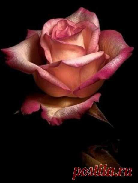 broche en métal doré une rose dans un coeur - Поиск в Google