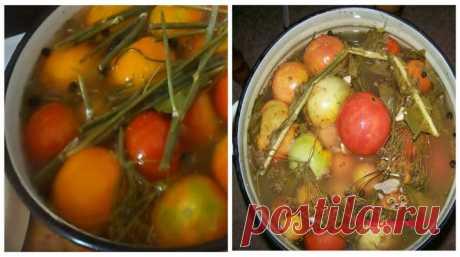 Вкусные соленые помидоры от моего дедушки - сайт кулинарии