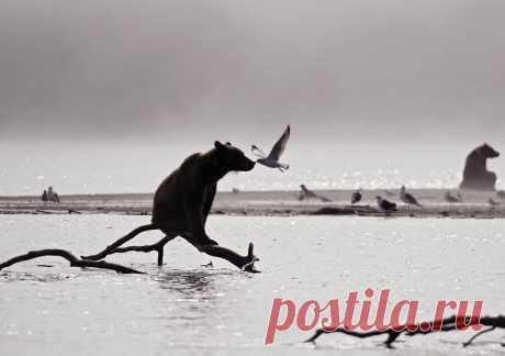Нетронутый мир – Фото – Коммерсантъ