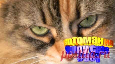 Вам нравится смотреть приколы про кошек? Тогда мы уверены, Вам понравится наше видео 😍. Также на котомании Вас ждут: видео кот,видео кота,видео коте,видео котов,видео кошек,видео кошка,видео кошки,видео о котах, видео про кота, видео смешных кошек, говорящие коты, коты видео приколы, кошка видео смешные, кошки и собаки видео, приколы котов, про котиков, про смешных котов до слез, самые смешные коты, смешные видео про кошек, смешные коты