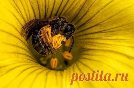 Пчелка за работой / Моя Планета