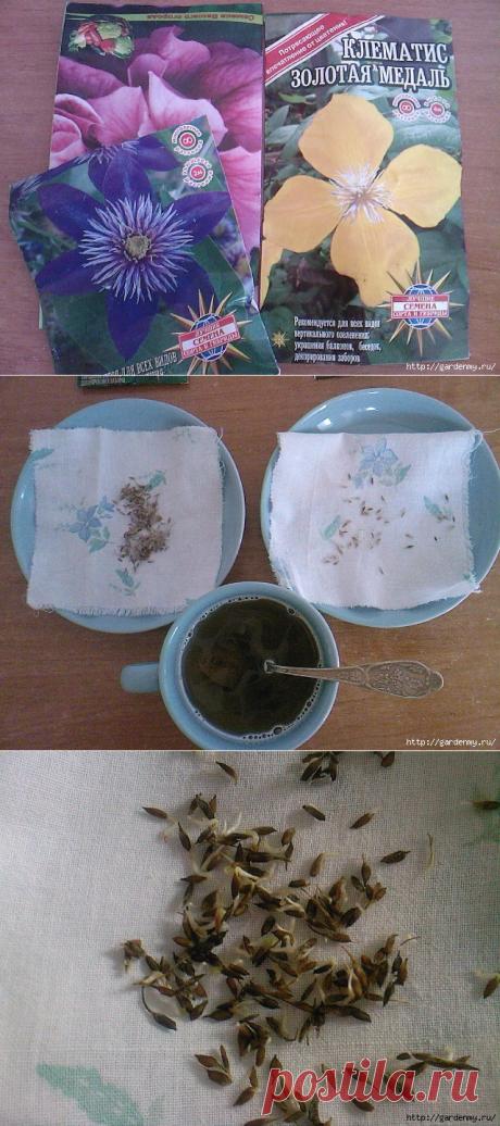 Ура!))) Получилось!!! Выращивание клематисов из семян
