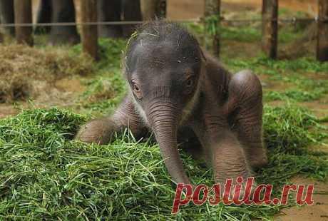 Самое интересное в мире: Азиатский слоненок... - natali5357@mail.ru - Почта Mail.Ru