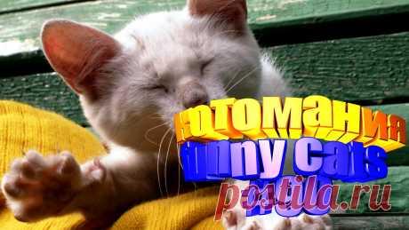 Любите смотреть смешные видео про котов? Тогда мы уверены, Вам понравится наше видео 😍. На котомании Вас ждут: кот том видео, видео котов, кошки видео смешные, смешно кошка, видео кошек, кот смешной, видео эти смешные кошки, кошка смешные видео, прикол для кошек, видео смешные приколы, видео приколы кошки, приколы видео смотреть бесплатно. #свежиеприколы, #котыприколы, #смешныекотята, #кошачьиприколы, #юморкотики, #funny_cats, #забавныекотики, #kittycat, #kittylove.