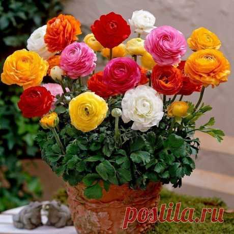 Ideal bouquets)