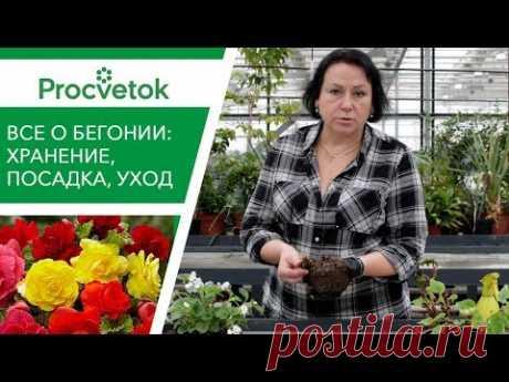 Секреты выращивания БЕГОНИИ. Хранение зимой, посадка, уход