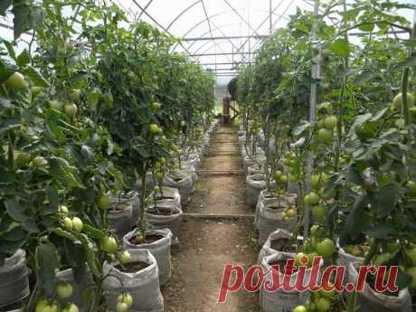 28 способов ускорить созревание томатов, перца, баклажанов и других овощей  В климате средней полосы лето короткое и прохладное, поэтому некоторые овощи не успевают созреть к концу сезона. Чтобы не остаться без урожая, процесс созревания нужно простимулировать.  Вот несколько нехитрых приемов, благодаря которым томаты, огурцы, перцы, баклажаны, картофель, тыквы, дыни, морковь, капуста и лук будут развиваться быстрее.  Как ускорить созревание помидоров 1. В течение 2-3 дней...