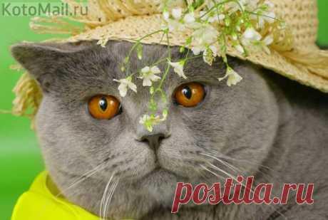 На даче водятся коты небывалой красоты