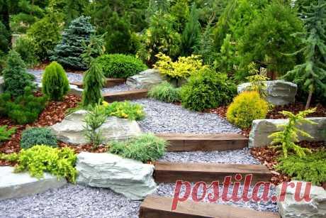 Виды хвойных растений для сада В нашей статье мы расскажем о том, какие виды хвойных растений лучше всего подходят для посадки в саду, об их особенностях и как за ними правильно ухаживать.