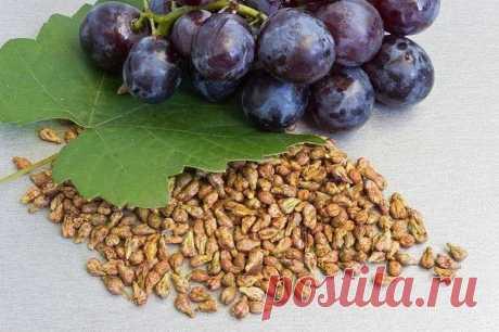 Когда плодовые косточки полезнее, чем сами фрукты / Будьте здоровы